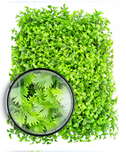 ARTIFICIAL PLANT WALL06.png